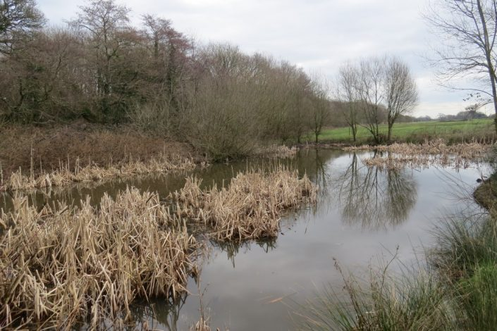 Birchmore Pond